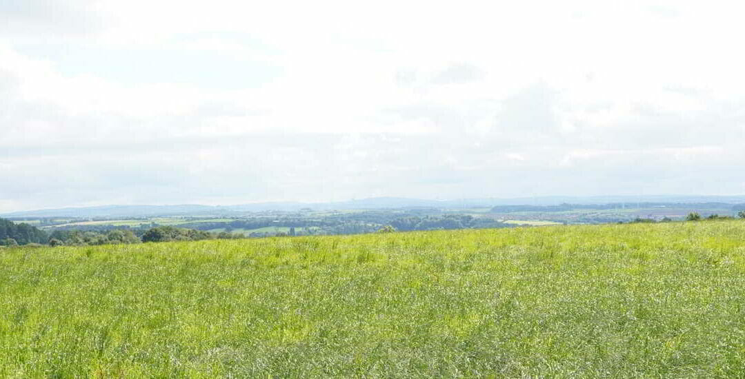 Current project – Land Re-designated from Green Belt – some realistic Planning Gain